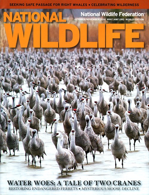 National Wildlife Magazine  National Wildlife Federation. Master Degree In Legal Studies. Commercial Real Estate Funds. Disputing A Debit Card Charge. Web Design Charlotte Nc Web Hosts With Cpanel. Insurance Annuity Rates Emails Addresses List. Cellulite Laser Treatment Cost. Concord Nc Golf Courses Reverse Mortgage Calc. Customer Engagement Platform